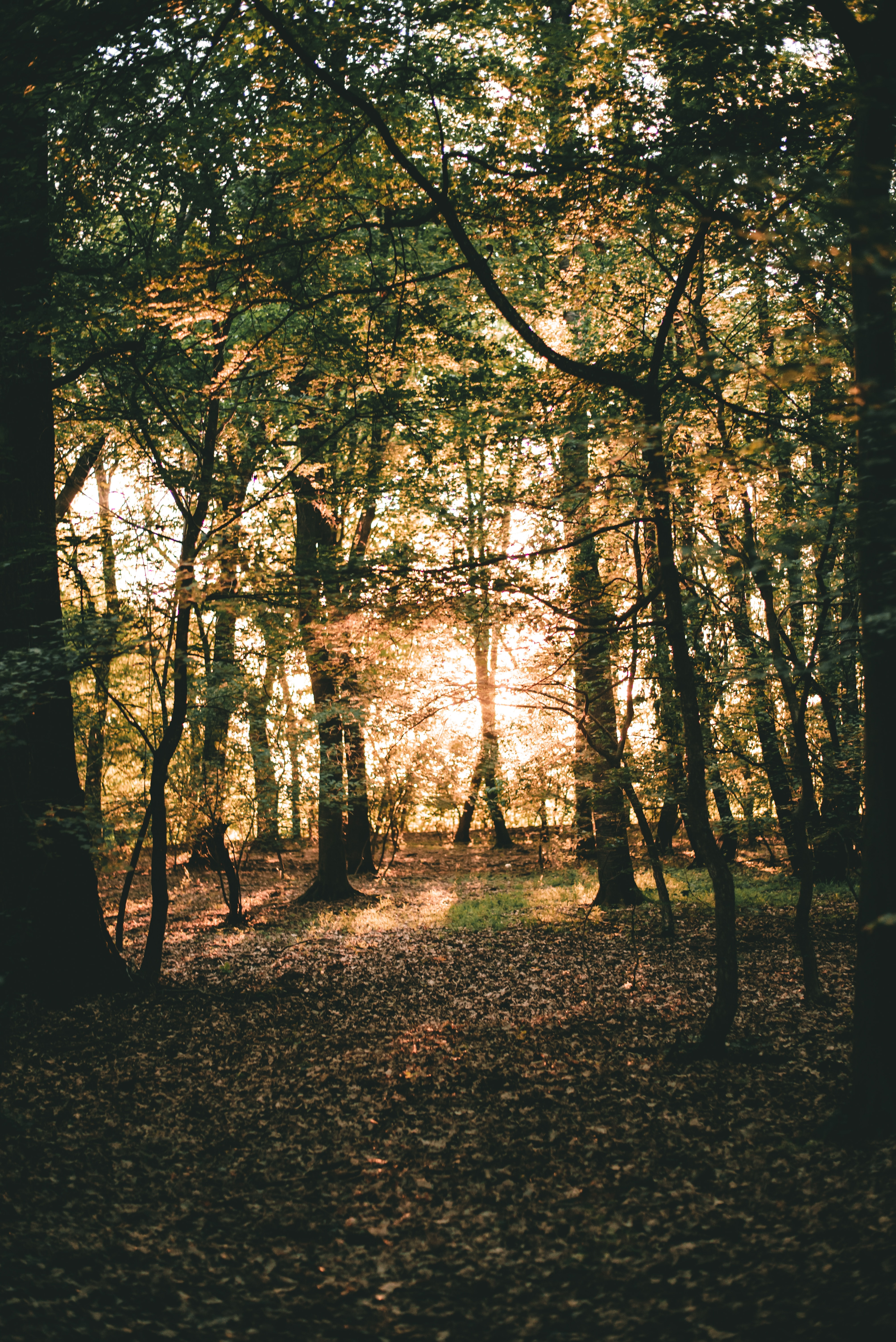 Rising Sun Walk