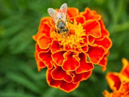 Top 5 Best Edible Flowers to Grow in Your Garden NOW!