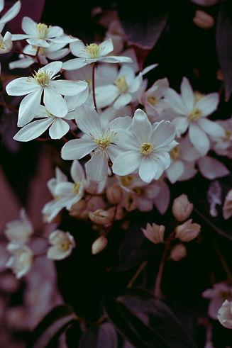 Image de Myrlene NUMA, fleurs