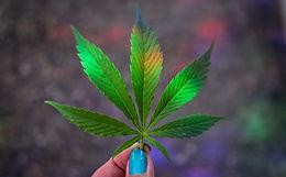 Medical Cannabis Mentor
