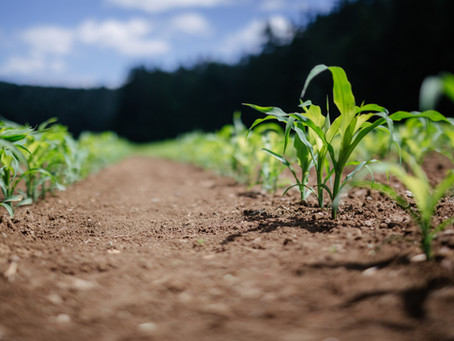 Netafim's Challenge on sub-surface drip-irrigation pipes
