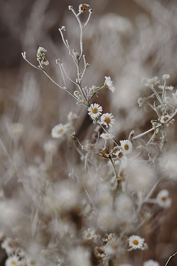 Image by Marija Gaba