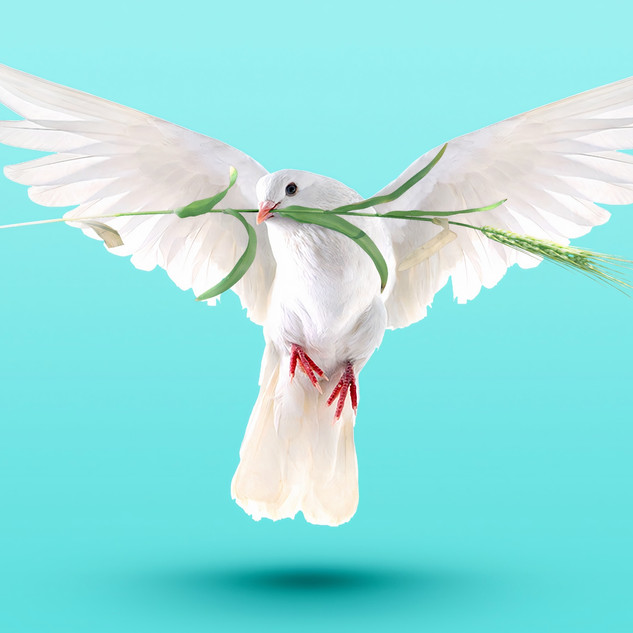 The dove came back with an olive leaf.