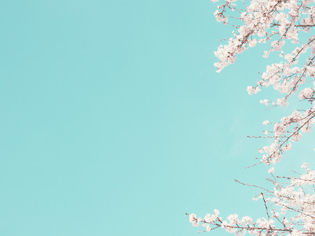 Makanan Jepang dengan Rasa Sakura