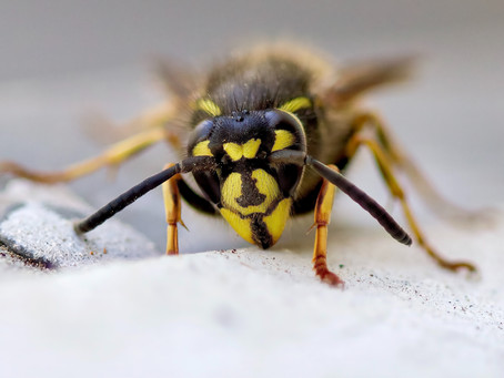 Wasp Nest Advice For Window Cleaners
