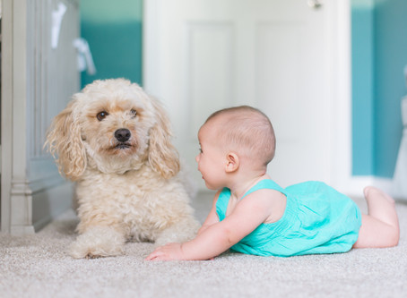 Babies & Fur-babies. How should I prepare for a newborn baby with my 1yr old retriever fur-baby?