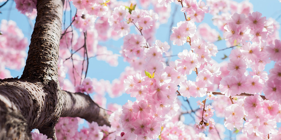 Frühlingserwachen - Online Yoga Workshop