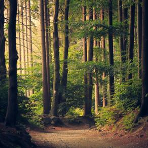 """Ko nozīmē koncepts """"meža pelde""""?"""