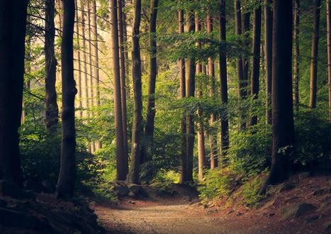 Lagen van het bos