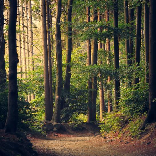 30 jaar natuuronderzoek in Limburg