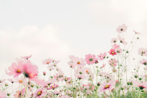 13 Ways to Celebrate the Spring Equinox
