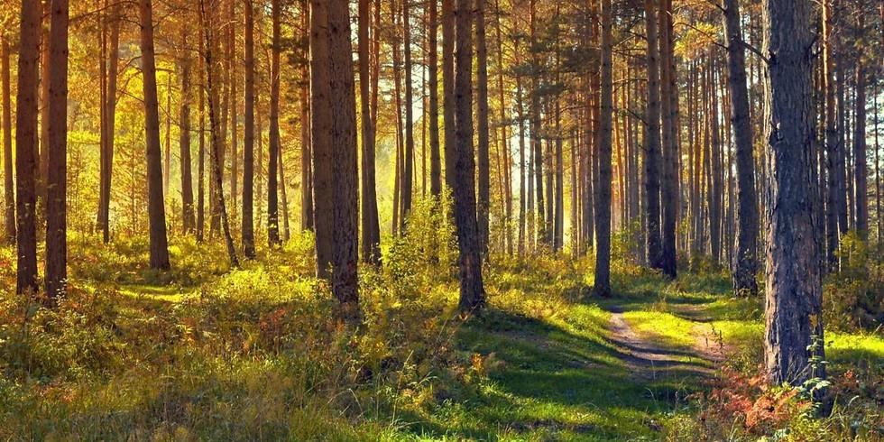 Forest bathing 1.5hrs Chamonix