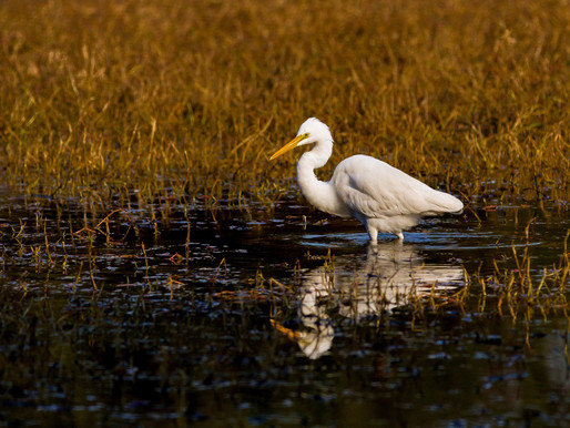 Biden administration details plans to conserve 30% of US land and water by 2030