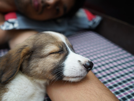 Pedigree puppy prices skyrocket amid coronavirus pandemic
