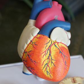 Le risque cardio-vasculaire :
