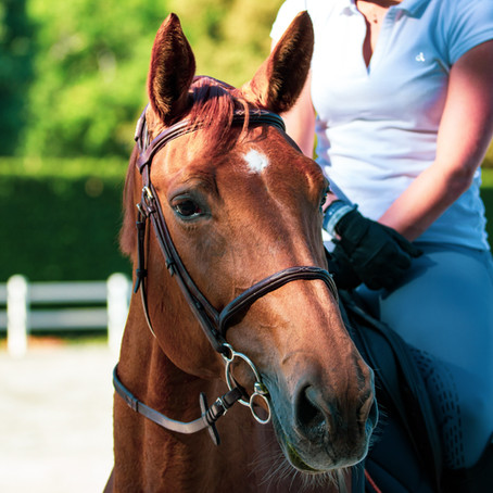 Intro to How Horses Learn: Understanding Their Minds to Improve How We Train