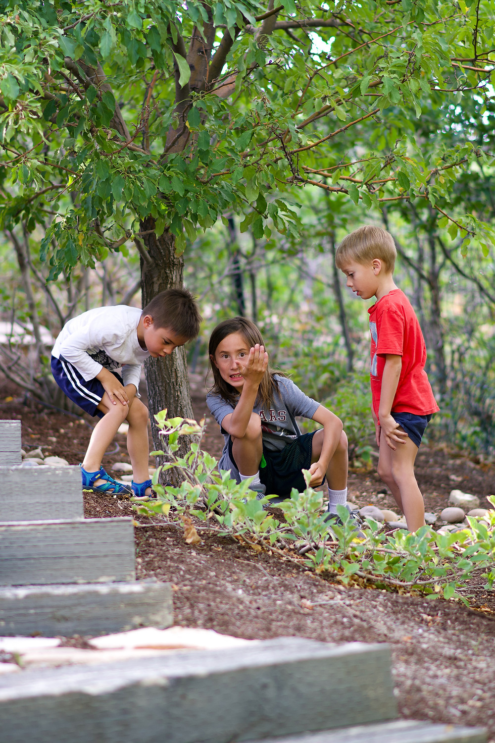 A mother sitting on the ground talking with two young boys who are planting seedlings