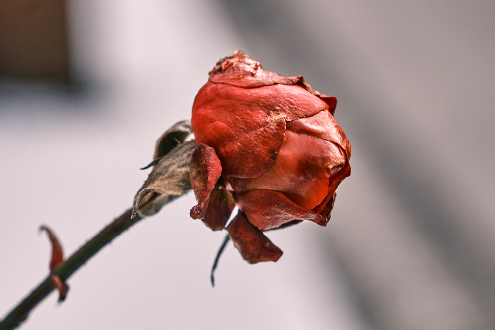 Child loss support, death of a child, stages of grief