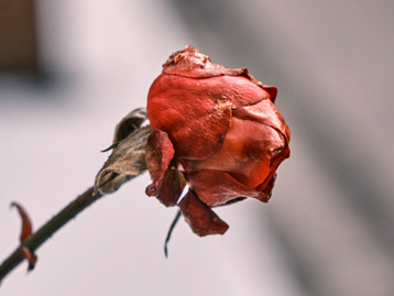 How to forgive intentionally whilst you are still grieving