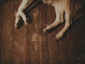 Are You Breaking Your Dogs Paws?