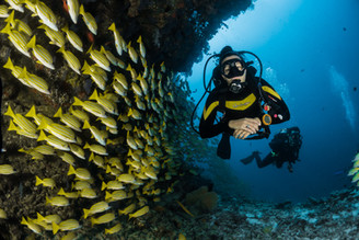 Superyacht Experiences, diving