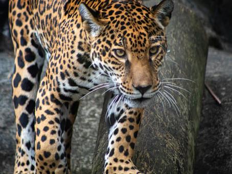 ¿Qué es la coexistencia con fauna silvestre?