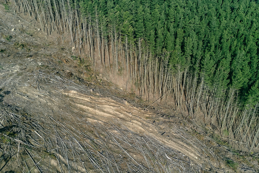 Deforestation from banks, greenwashing in finance, Hannah Duncan Investment Content