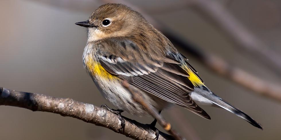Beginning to Bird: Spring Songs (Adult Program)