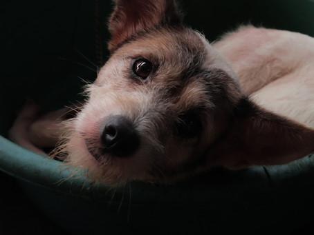 Quarantine Pets