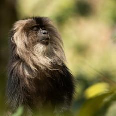 Macaque Coalition News