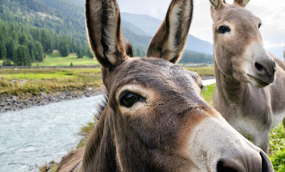 Donkeys Do Subtraction