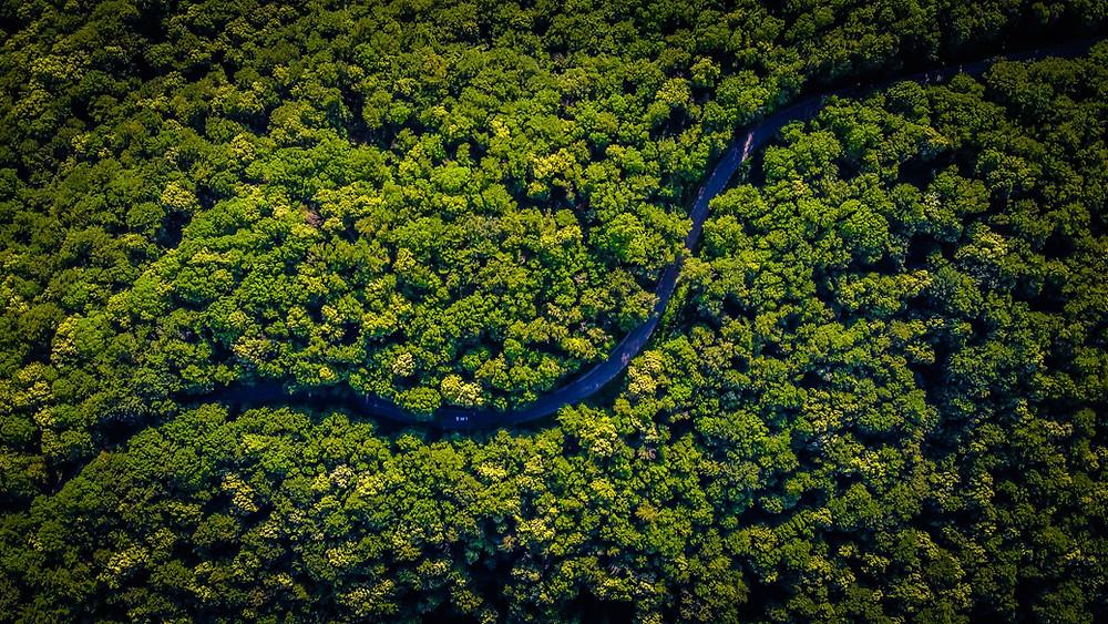Climate Change Deforestation