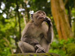 Man dies in China after contracting Monkey B Virus