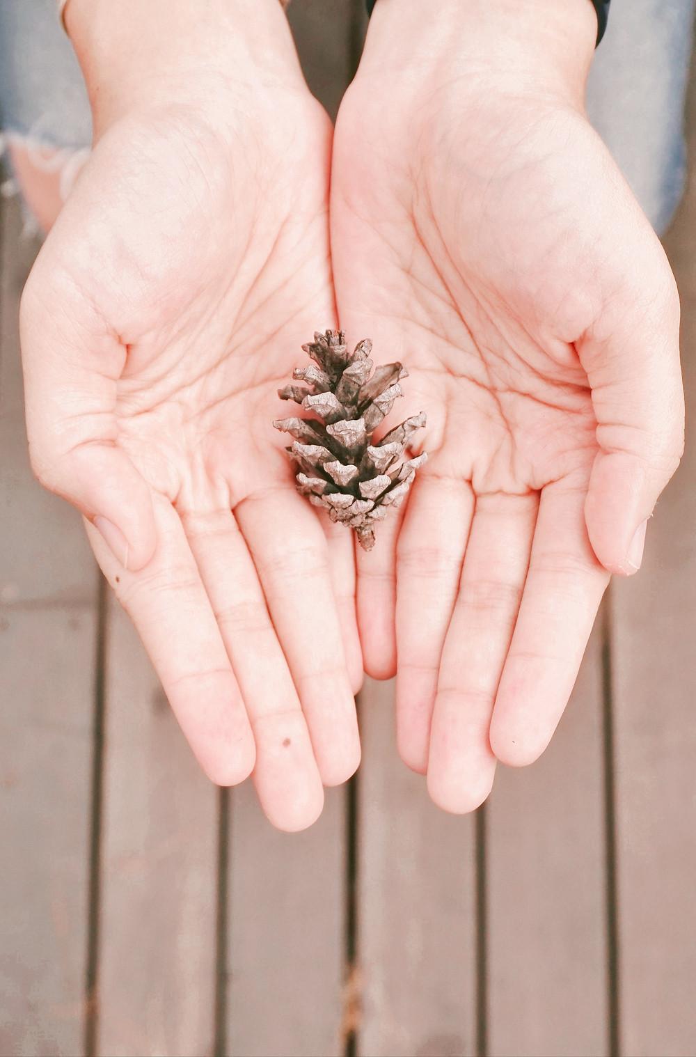 hands holding tiny tiny pinecone
