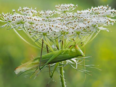 I Ain't No Grasshopper