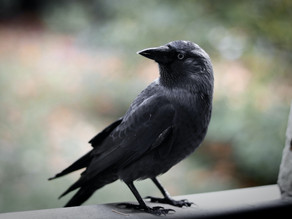 Broken Windows and Staring Crows