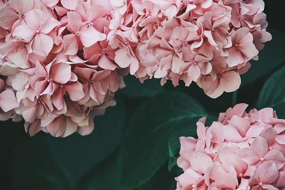Image by Marica Romeo