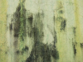 3 reasons why mold may appear on walls
