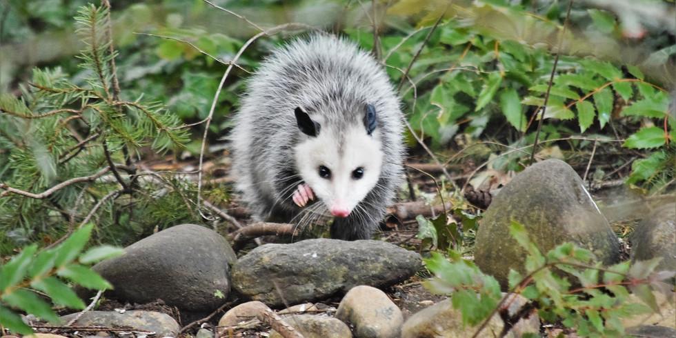 Opossum Storytime
