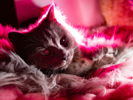 """""""There's No Such Thing as Pink Cat"""""""