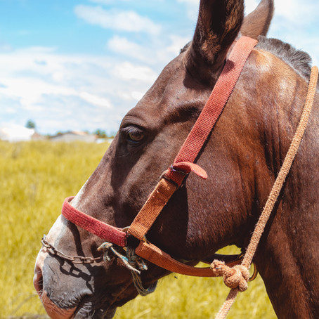 How Horses Say No (Are You Listening?)