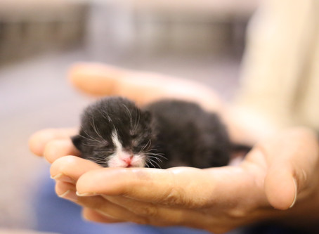 Things You Should Know About Your New Kitten | New Kitten Recommendations