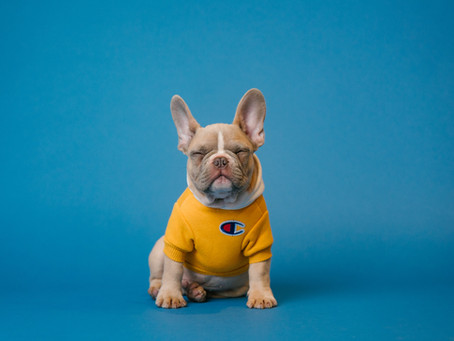 לימוד אנגלית : Prepositions -On,In, Under - Pets
