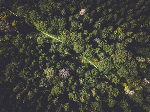 Earth Day 2021: Benefits of environmental investment in LATAM