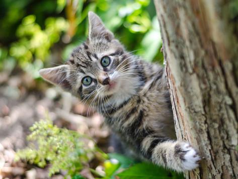 The Penbode Pet Vets Kitten Book