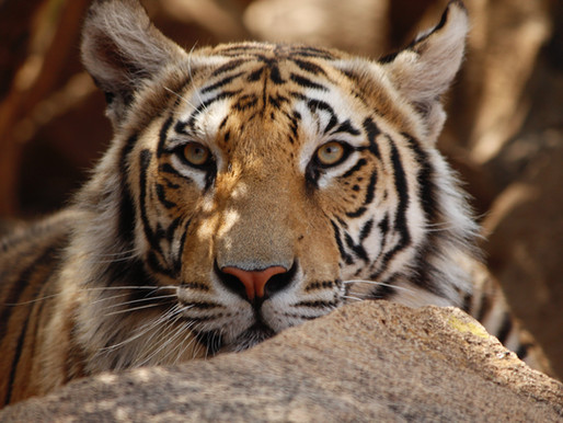 More delays in Tiger King Park lawsuit