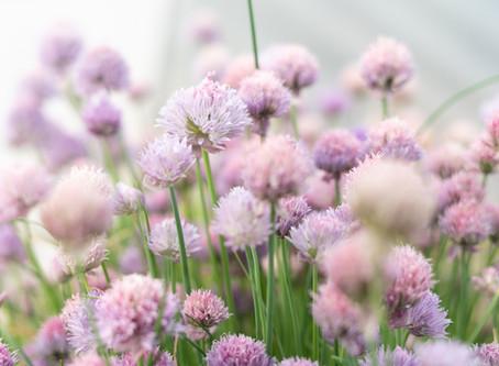 I 5 fiori che salveranno il tuo giardino dai cervi