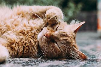 Linha de Produtos para Gatos na Natural Kingdom