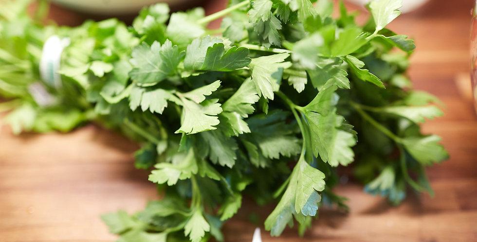 Herbs- Flat Parsley