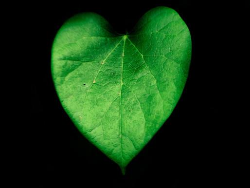#GreenHeartForSocialCare 💚